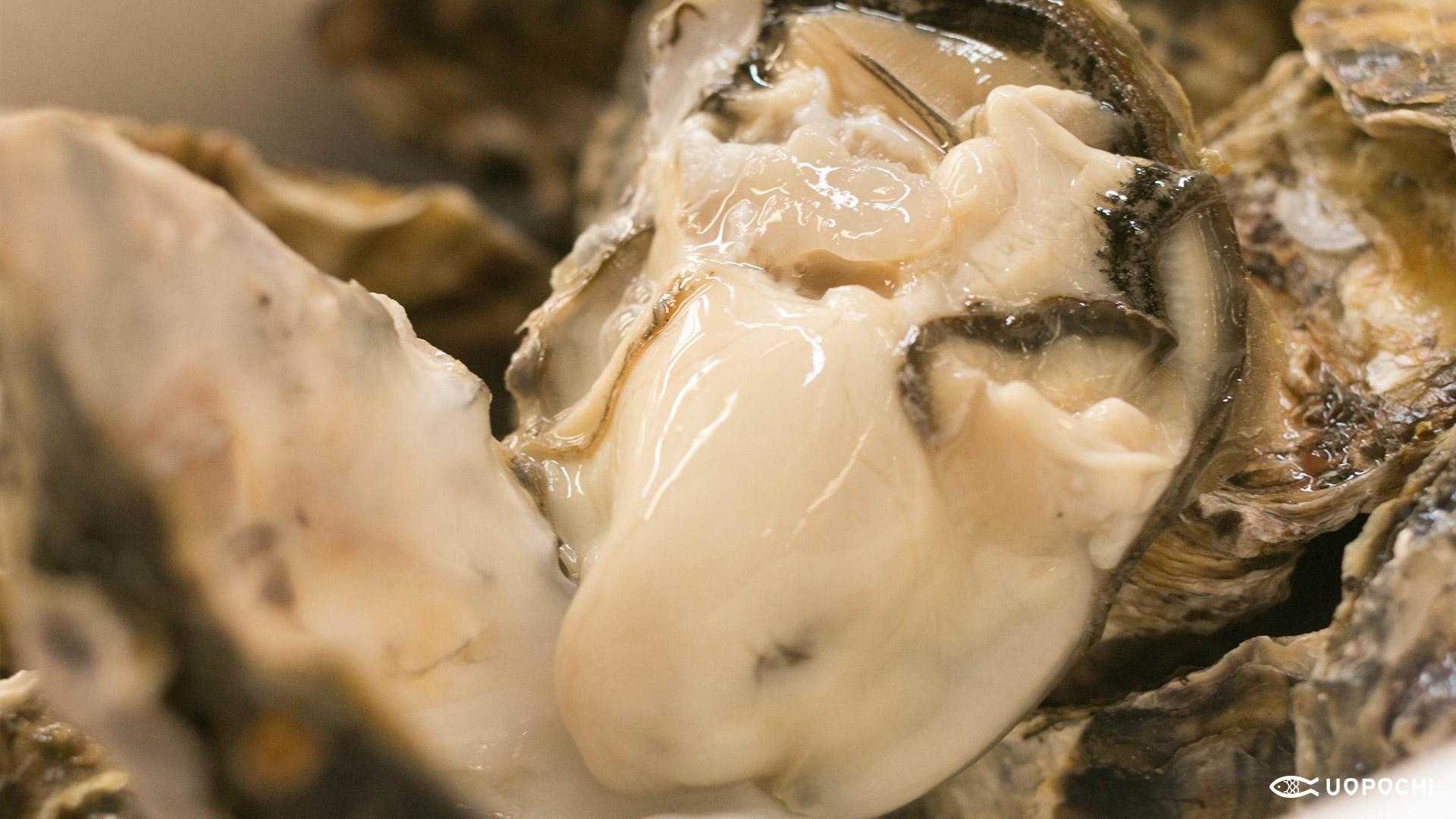 小長井の牡蠣