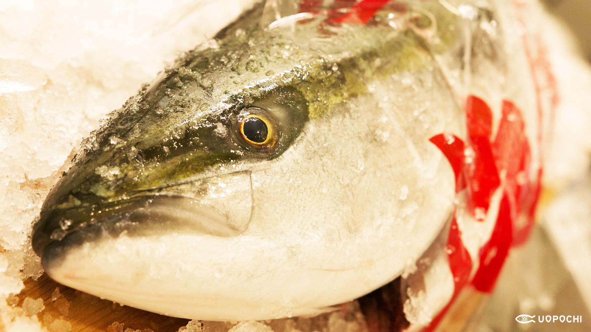 一年のなかで最も旨くなる!寒の魚たち | 魚ポチブログ | さかな通信 ...